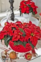 weihnachtssterne-poinsettia-2013-decoration-10